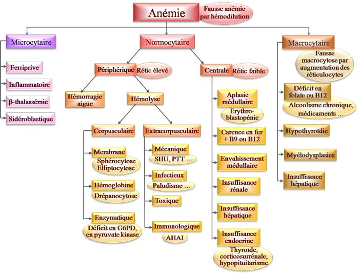 anemie diagnostic hpv virus and treatment